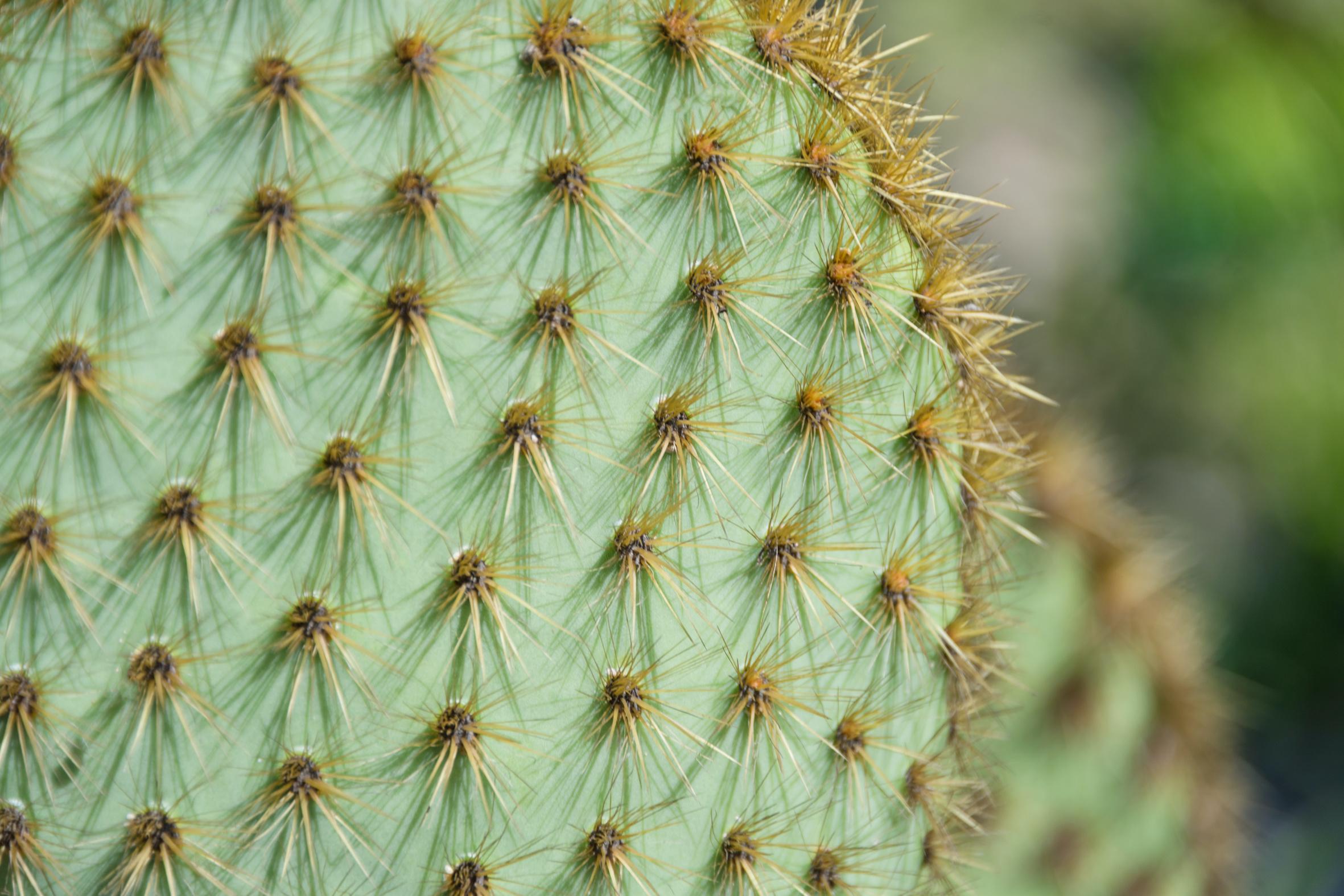 cactus prickles