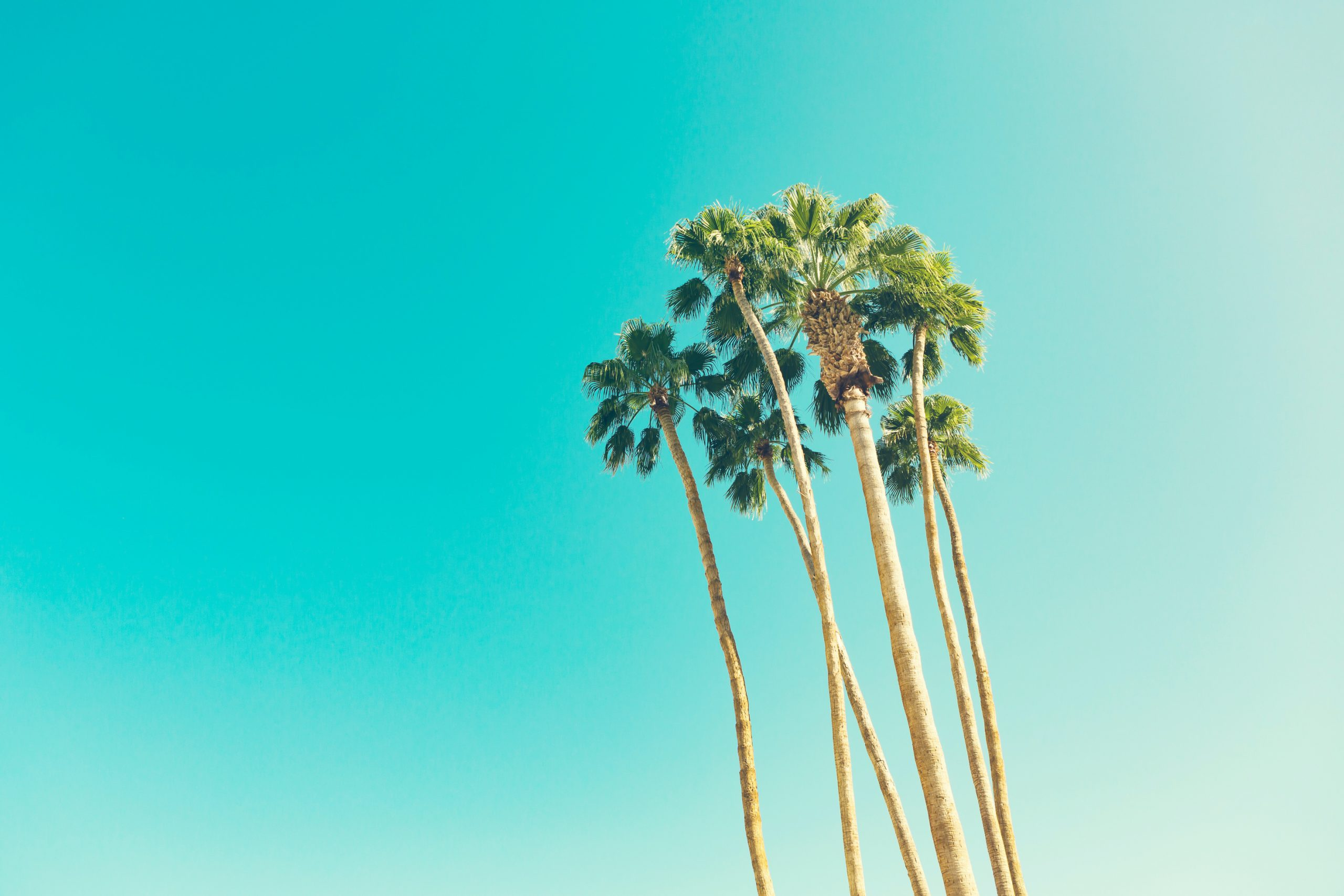 strong straight palm trees
